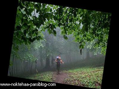 http://mobarez.persiangig.com/ax/tafrih/jangal.jpg